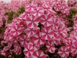 Выставка «Цветы Северной Столицы»