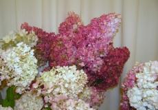 Выставка «Цветы осени»