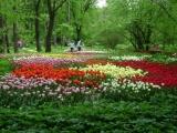Фестиваль цветов в «Аптекарском огороде»